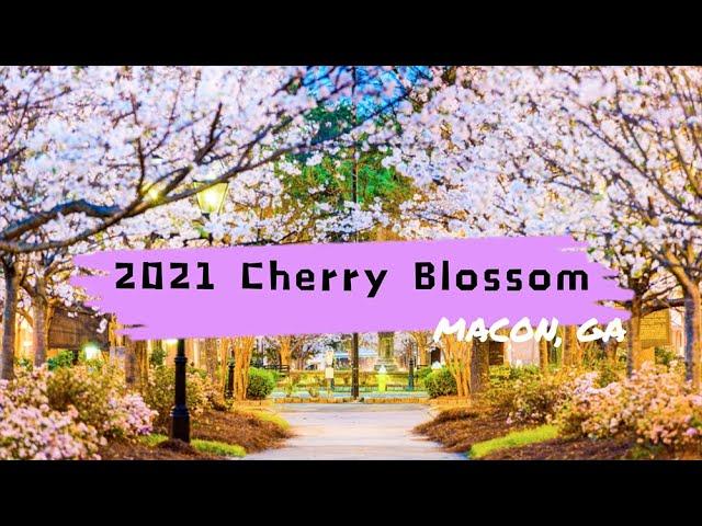 2021 Cherry Blossom Festival | Macon, GA