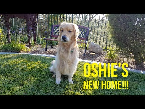 CHECK OUT OSHIE'S NEW HOME | Oshies World