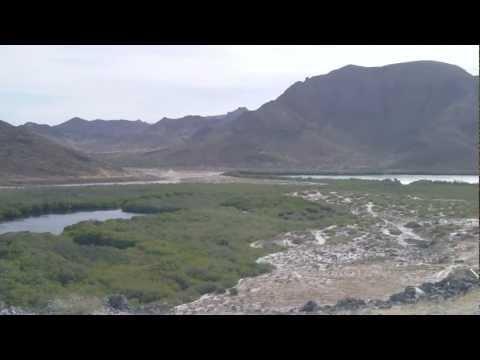 Mangrove in front of Balandra Beach, La Paz, Southern Baja