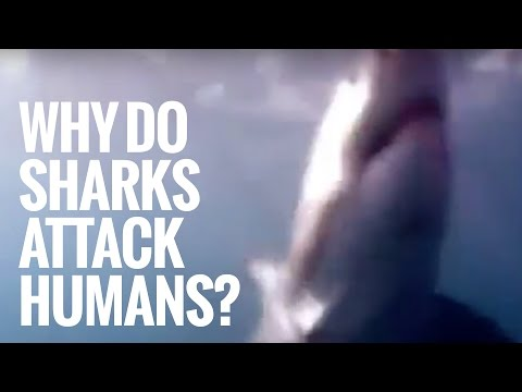 Shark Documentary: Why Do Sharks Attack Humans?