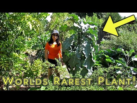 Propagating The Rarest Plant In The World With 100% Success!