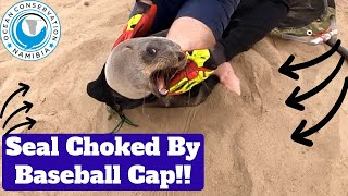 Seal Choked By Baseball Cap!!