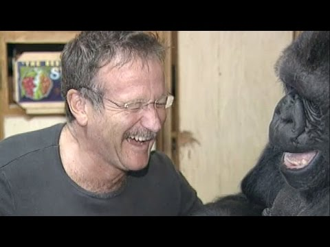 Koko's Tribute to Robin Williams