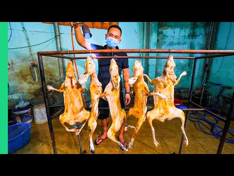 Asia's Strange Meat Secret!! Why don't more people eat this?