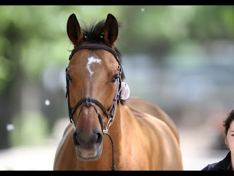LGCT Behind The Scenes: What makes the ultimate Grand Prix show jumper?
