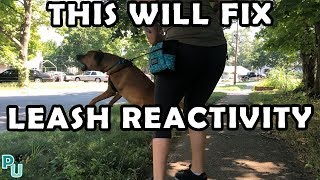 THIS WILL FIX YOUR DOG'S LEASH REACTIVITY | Pawsome University | Gryffin