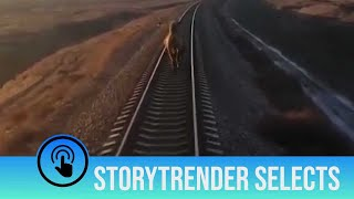 Amusing moment camel holds up train for TEN minutes
