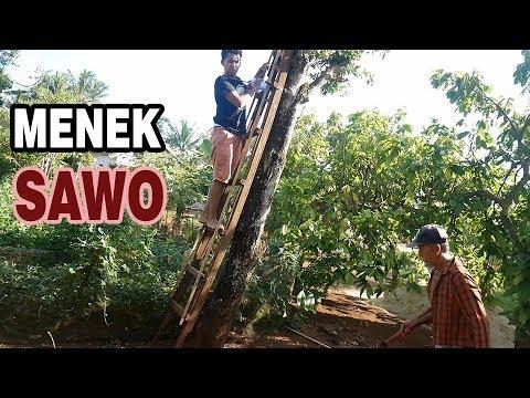 ngunduh sawo | lampung | di rumah mertua | bajidot vlog