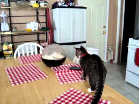 cat vs popcorn maker