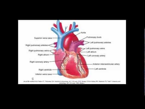 Cardiovascular Alterations