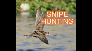 Download Wilson's Snipe: NARRATED