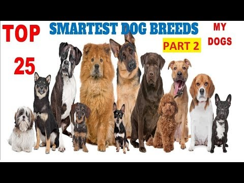 Top 25 Smartest Dog Breeds In The World (Part 2)#Newest