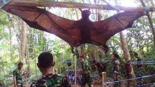 菲律宾拥有世界上最大的蝙蝠,翼展最宽可达4米,和人类差不多高