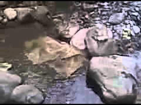 Prospecting for gold in a new pocket vt creek part 1 youtube prospecting for gold in a new pocket vt creek part 1 publicscrutiny Choice Image