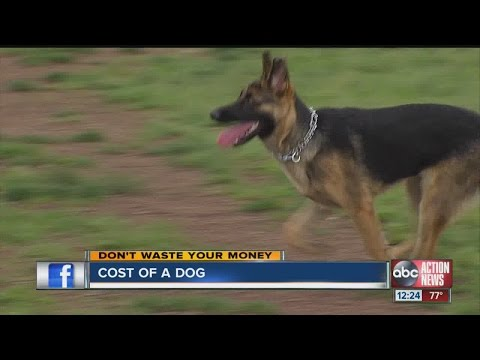 Don't Waste Your Money: The Cost Of Owning A Dog