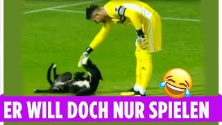Hund stürmt das Feld und spielt mit dem Keeper