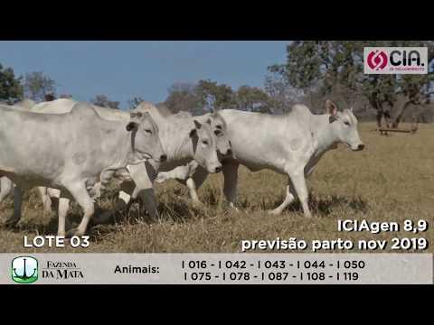 LOTE 03 - 5o Leilão - CIA de Melhoramento 2019 - Fazenda da Mata