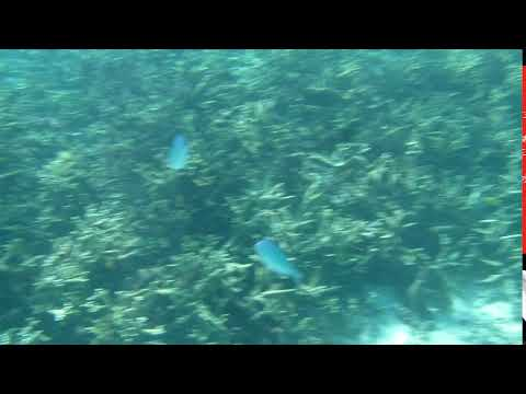 Pacific Jewel, Mystery Island Drift Snorket