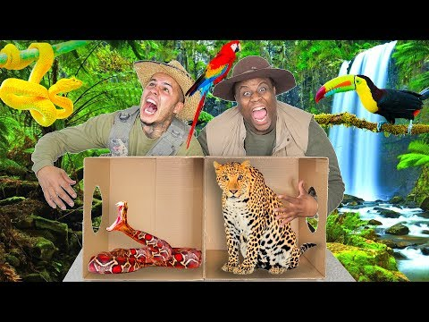 What's In The BOX Challenge? (JUNGLE ANIMALS EDITION)