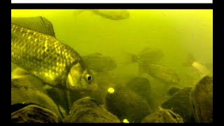 Инской тёплый канал ловля карася подводное видео