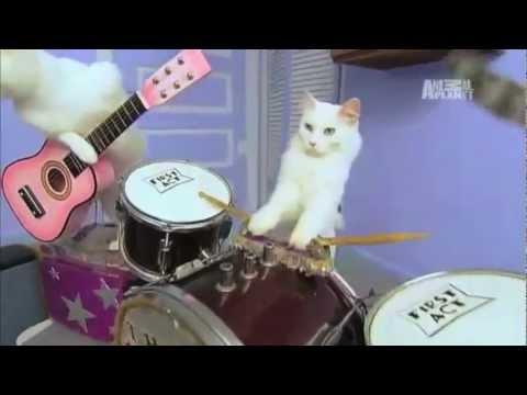 meowzers aka death metal cats youtube. Black Bedroom Furniture Sets. Home Design Ideas