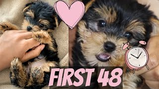 FIRST 48 HOURS W/ A NEW YORKIE PUPPY!! GOOD BAD & UGLY!!