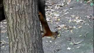 Белка в Измайловском парке(, 2012-09-25T15:15:24.000Z)