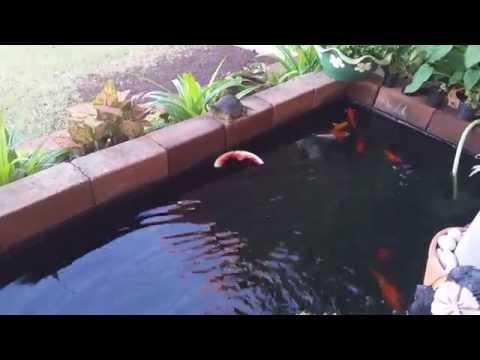 สวนริมบ่อปลาคาร์ฟ Koi Pond