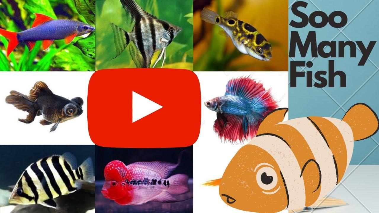 Puffer fish, Flower horn, Snake head, Indonesia tiger, Angel fish, Rainbow shark  added to my tank