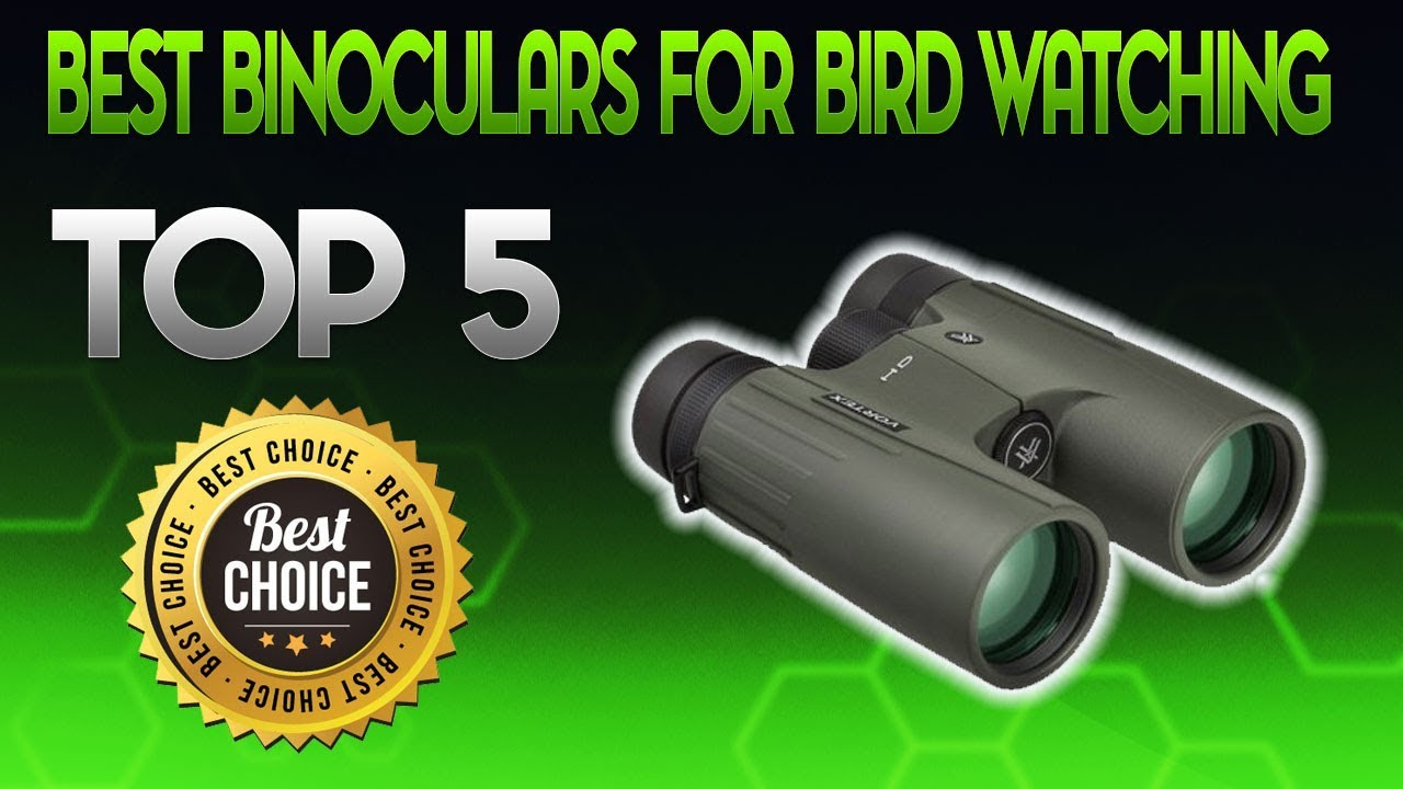 Best Binoculars For Bird Watching 2019 Binocular For Bird Watching Review Youtube