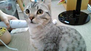 肩こり用に買ったハンディマッサージャーを子猫に近づけたところ、子猫...