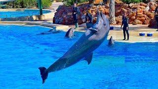 Η παράσταση των δελφινιών στο Αττικό Ζωολογικό Πάρκο