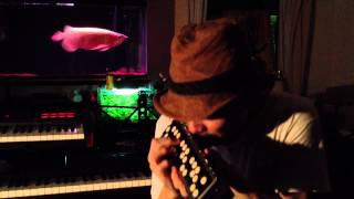 Oblivion / Astor Piazzolla / playing accordina by takashi kamide