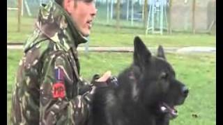 Raf Police Dogs In Action