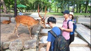 A Tour of NARA, JAPAN   The Place Where Deer Roam Free