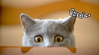 ตรรกะของสิ่งที่เรียกว่า ''แมว''