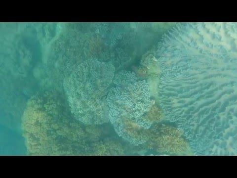 Bargara Bundaberg Queensland snorkelling