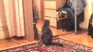 Cat realizes that he's a CAT / Кот осознал, что он КОТ