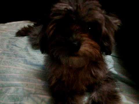 My puppy saying Mama