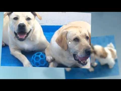 Dog Day Care Baltimore Maryland