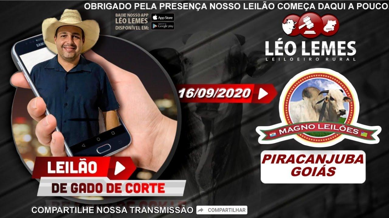 Leilão de Gado de Corte em Goiás - Magno Leilões - 16/09/2020 | Leilão Ao Vivo