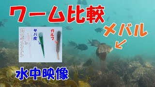 【水中映像】デイメバルに有効なワーム(やっぱりそれが良いのか)