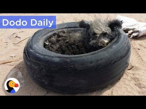 Dog Living in Tire Rescued & ADOPTABLE: Best Animal Videos | The Dodo Daily