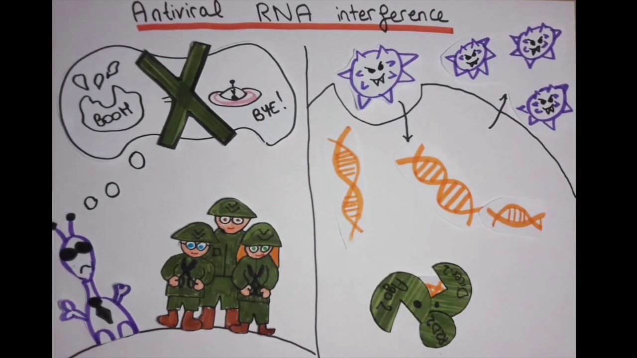 Fighting viruses with RNA interference