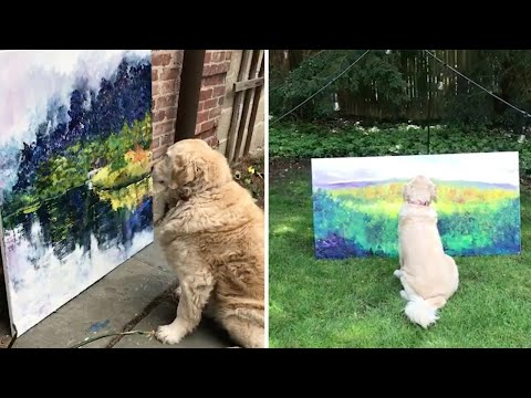 Adorable Dog Is Owner's Art Critic