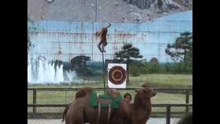 中国・桂林の動物園で繰り広げられる動物ショー。クマの玉乗り、オート...