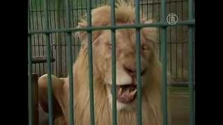 Таиланд: тысячи диких животных нашли в клетках (новости)