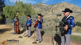 No Compro Amores - Chirrines Con Tololoche  San Bernardino CA 818-290-4645