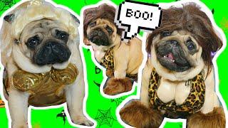 ЧУМОВЫЕ КОСТЮМЫ ДЛЯ СОБАК НА ХЭЛЛОУИН ! моя собака Лэди гага ! челлендж