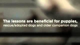 Bucks County, Pa In-home Dog Behavior Training - Bob's Pet